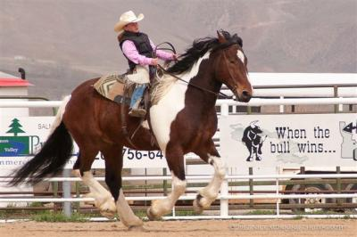Salmon Select Horse & Mule Sale