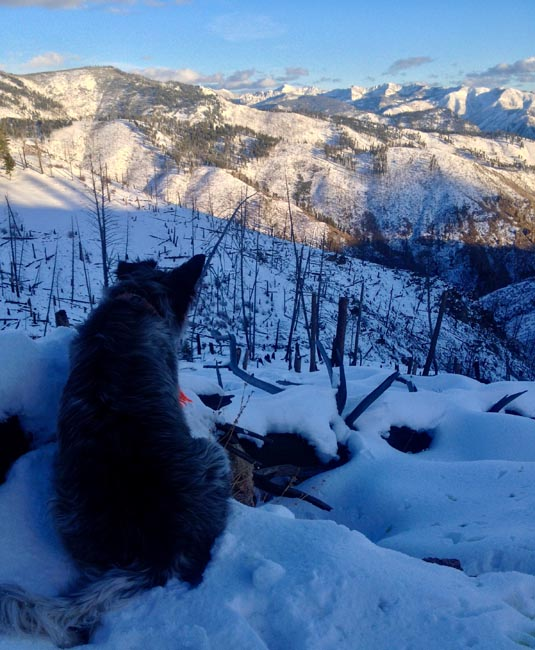 image: dog at camp on watch
