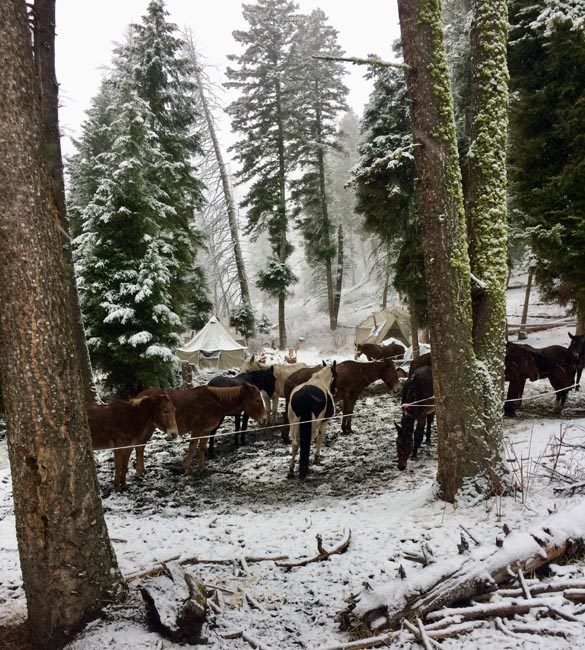 Pack horses corralled at camp